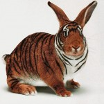 Positive Thinking Inspired by Tiger Bunny